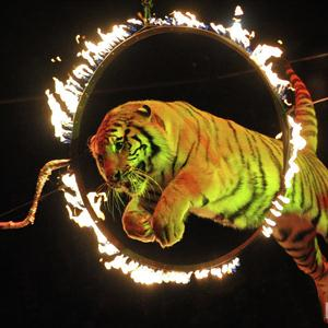 Цирки Карсуна